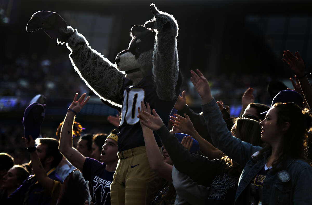 Washington's mascot Harry stands among the student section as they cheer in the first half of an NCAA football game against Oregon State at Husky Stadium on Saturday, Oct. 22, 2016.