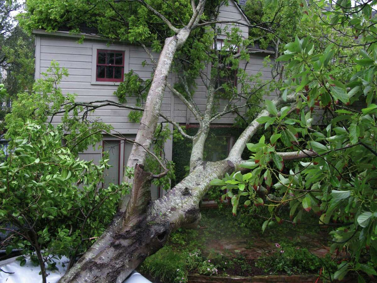 A large tree uprooted by high winds lies against a house in the Southgate neighborhood near Rice University, also crushing a trailer (lower left) as Houston reacts Saturday after the passing of Hurricane Ike. Saturday, September 13, 2008, in Houston. (Steve Ueckert / Chronicle)