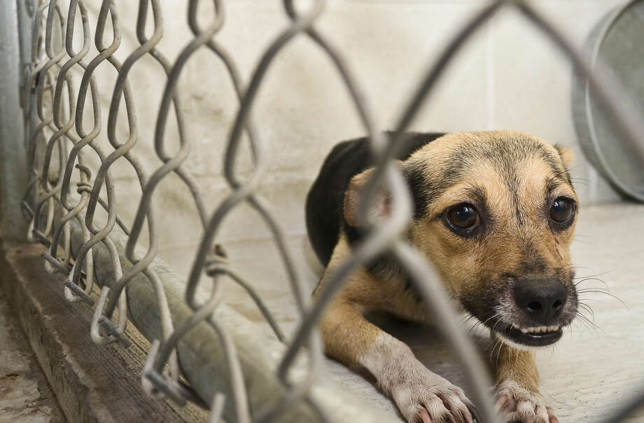 USDA removes animal welfare reports from its website