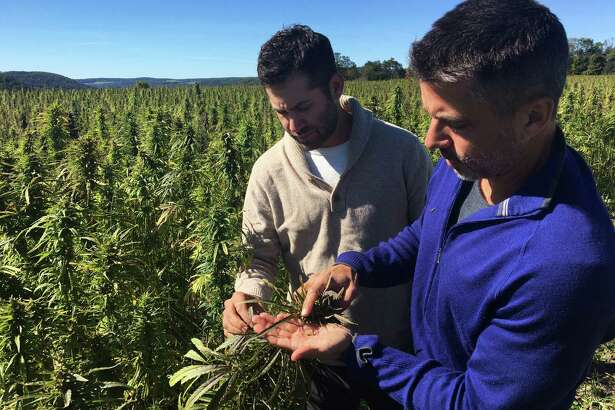 In this Sept. 25, 2016 photo, Dan Dolgin, left, and Mark Justh examine seeds from hemp plants on their JD Farms in Eaton, N.Y. JD Farms in central New York harvested the state's first legal hemp this fall under a university research partnership. (AP Photo/Mary Esch) ORG XMIT: RPME101