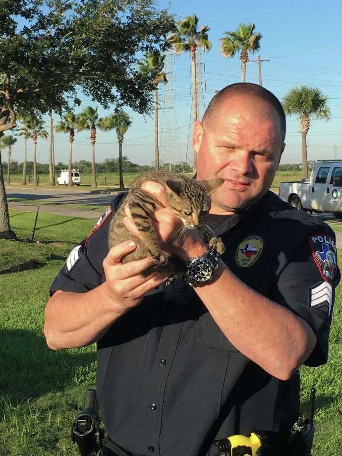 Kemah Police Sgt. Jerry Barmore holds the rescued kitten on Friday, Oct. 21, 2016. Photo: Kemah Police Department