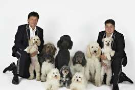 The Olate Dogs perform at The Warehouse at Fairfield Theatre Company on Sunday, Oct. 30.