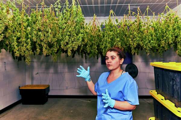 Emily Errico, a cultivation technician, explaining the marijuana-drying process at Vireo Health in Johnstown, N.Y., March 28, 2016. Vireo is one of at least two companies aiming to sell certified-kosher marijuana products. (JR Delia/The New York Times) ORG XMIT: XNYT71