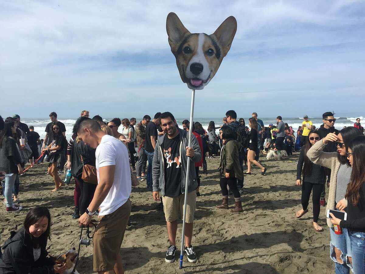 CorgiCon attracted many corgis and their human fans to Ocean Beach on Saturday, Oct. 22.