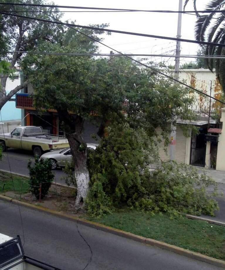 Several families were left without energy when strong winds caused a tree to fall, knocking down wires at Avenida Obregón, between calles Madero and Independencia, in Nuevo Laredo, México, Monday morning. Authorities responded to the scene to clear branches off the street, and the electric company estimated that the power will be restored within 6 hours. (Courtesy Photo)