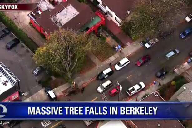 A large tree fell down near College and Alcatraz in Berkeley on Monday.