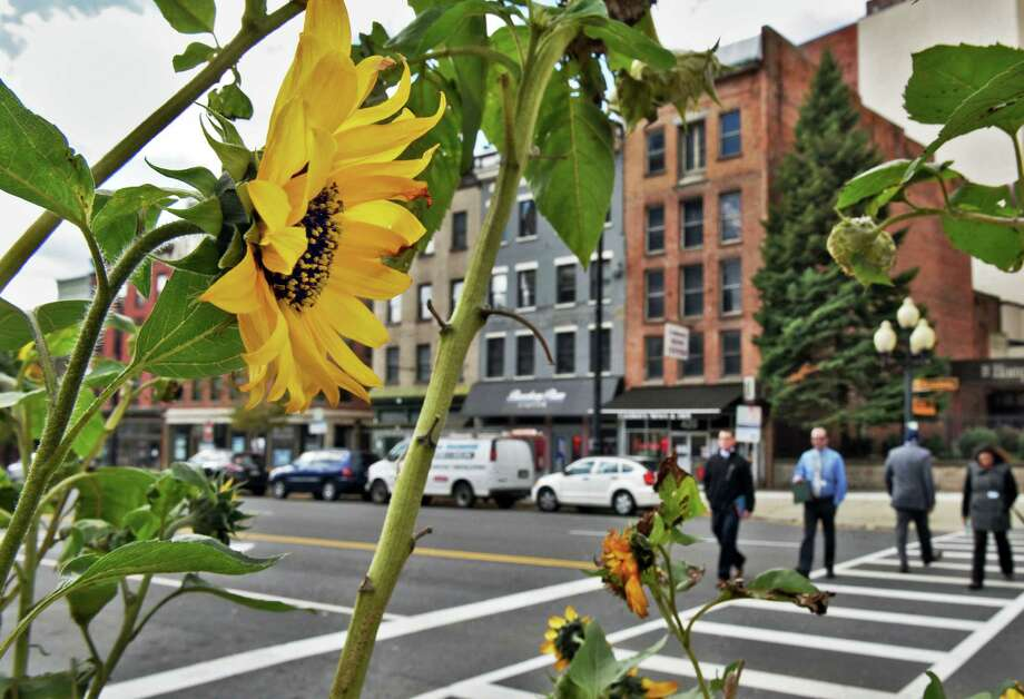The last of summer's flowers hangs on to its bloom at State St. and Broadway Tuesday Oct. 25, 2016 in Albany, NY.  (John Carl D'Annibale / Times Union) Photo: John Carl D'Annibale / 20038537A