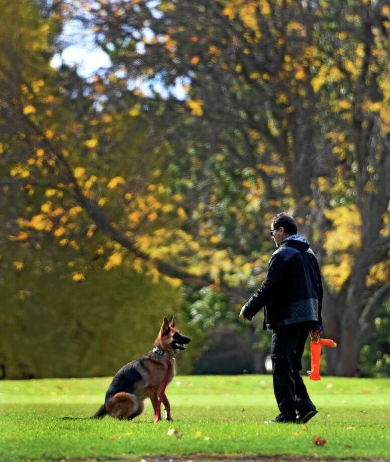 Albany Dog Training