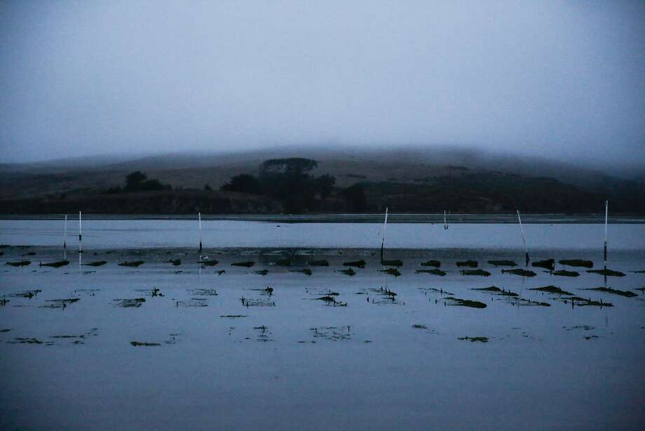 The Hog Island Oyster Co. oyster farm is seen in Tomales Bay where workers harvested oysters. On Tuesday evening, search-and-rescue teams were searching the area for a missing boater. Photo: Gabrielle Lurie, The Chronicle