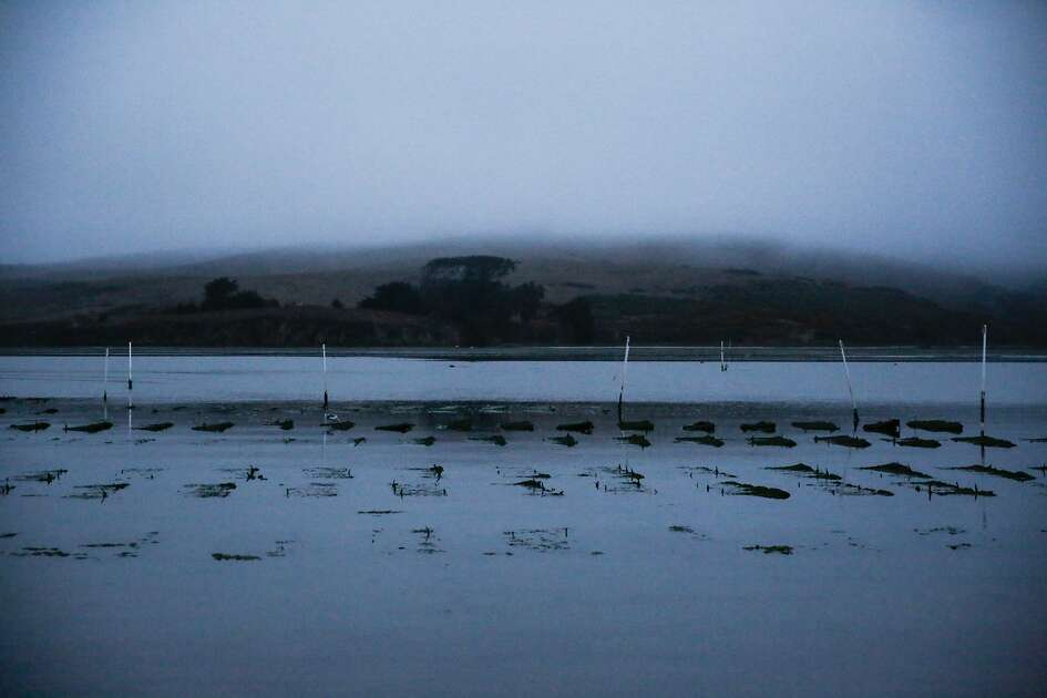 The Hog Island Oyster Co. oyster farm is seen in Tomales Bay where workers harvested oysters, in Marshall, California, on Wednesday, Oct. 12, 2016.