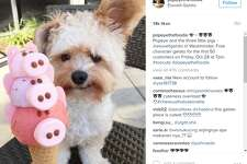 """""""Popeye and the three little pigs - @eisweltgelato in Westminster. Free character gelato for the first 50 customers on Friday, Oct 28 at 7pm. #toocute #popeyethefoodie,"""" @popeyethefoodie."""