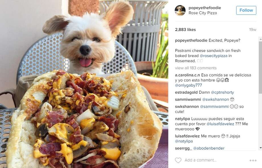 """Excited, Popeye?Pastrami cheese sandwich on fresh baked bread @rosecitypizza in Rosemead,"" @popeyethefoodie. Photo: Instagram.com/popeyethefoodie"