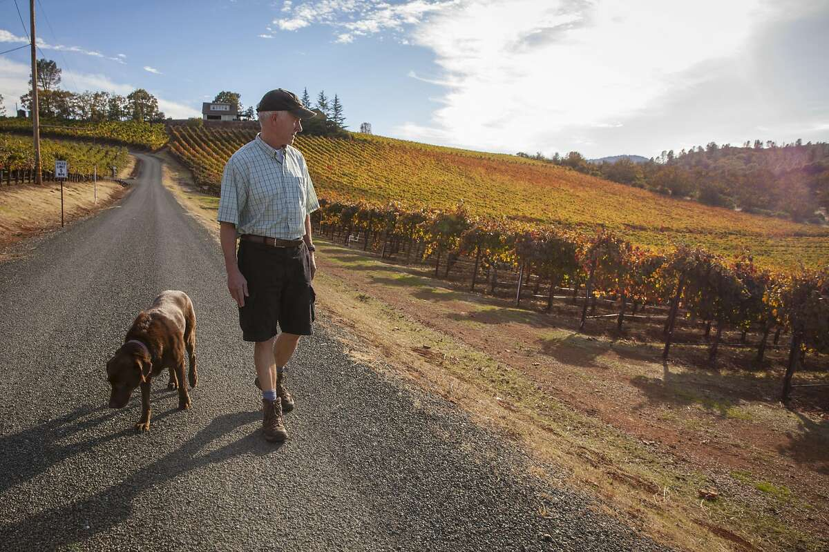 Gregory Graham walks along vineyards with his dog Reba, at his winery in Lower Lake.