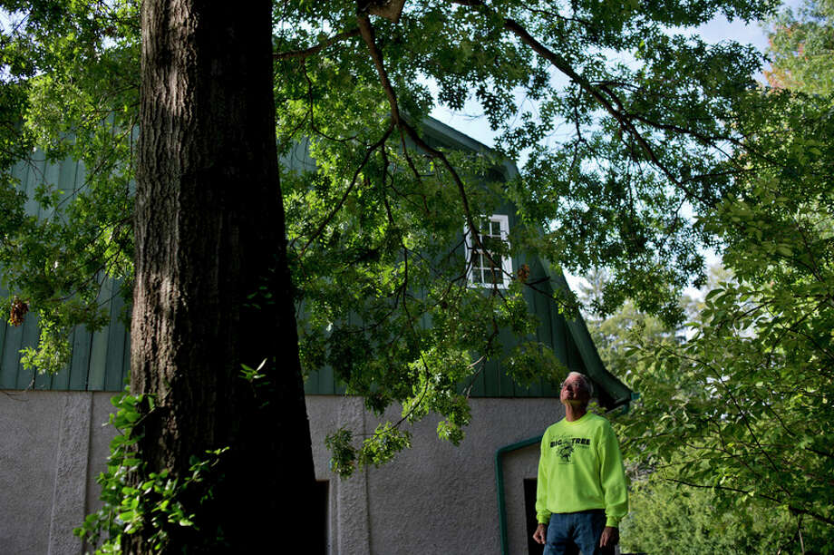 the big tree register is the place to be  for a tree  and midland u0026 39 s dow gardens has its share of