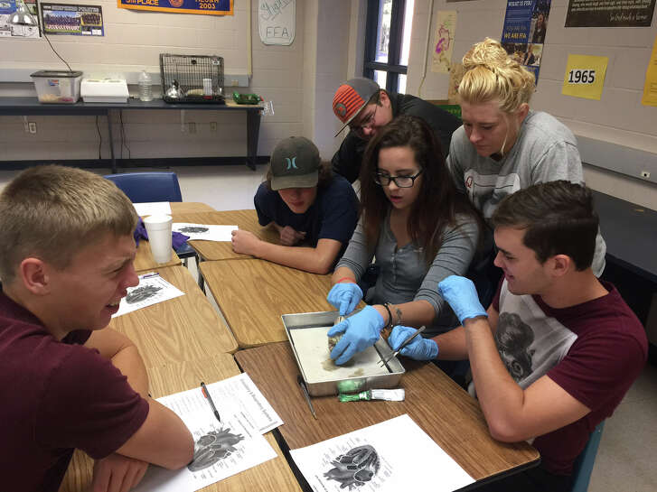 The Advanced Animal Science class at Shepherd High School is discussing the circulatory system this week. To give them a better perspective, students participated in dissecting sheep hearts.