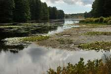 Plants encroach in on the diminished Aspetuck Reservoir in Easton, Conn. as water levels have dropped due to drought conditions on Tuesday, September 27, 2016.
