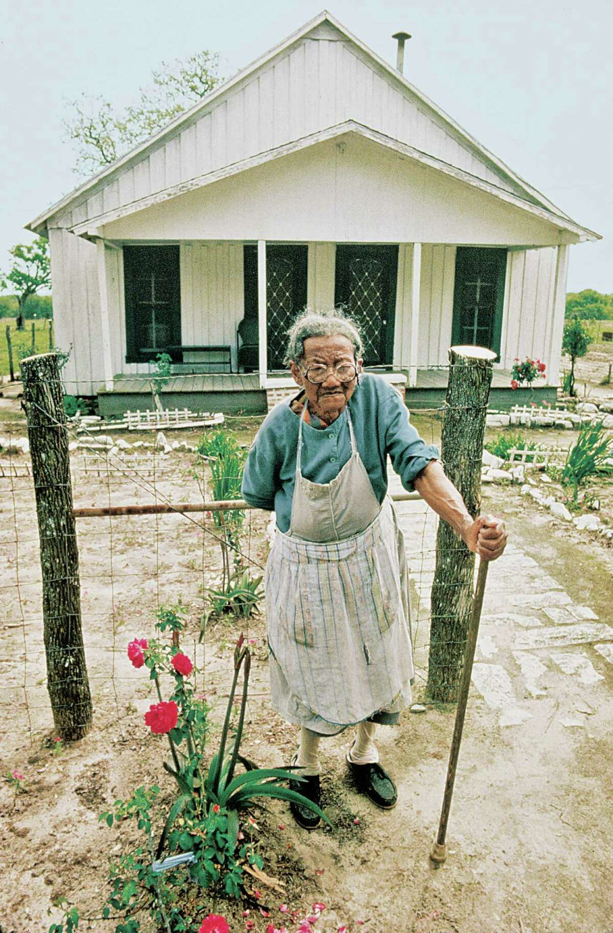 """The Texas Rose Rustlers gathered cuttings of a """"Maggie"""" rose from the swept dirt yard of Mattie Breedlove. Bill Welch had found the same rose growing in his wife's grandmother's backyard in Louisiana, and named it for her. The rustlers found """"Maggie"""" even in Bermuda, proving that although its original identity was lost, the rose """"most certainly was an introduced variety,"""" says Antique Rose Emporium owner Mike Shoup."""