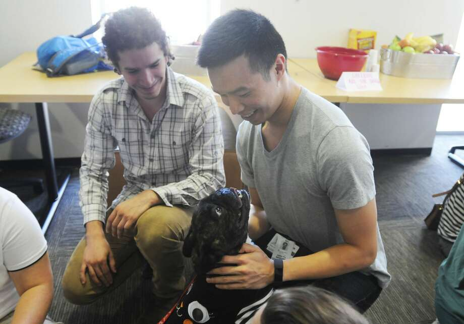 Baylor College of Medicine brought in therapy dogs to calm stressed med students during exam week. Photo: Bethany Strother, Baylor College Of Medicine