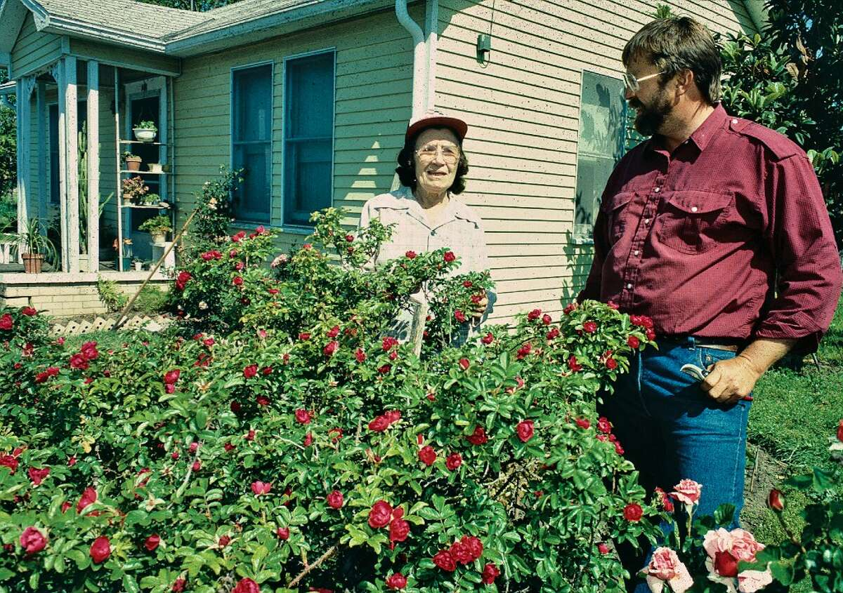 """Mike Shoup with a woman he remembers as Mrs. Meyers, at her home in Brenham, where the TexasRoseRustlerscollected cuttings of herrose""""Louis Philipe."""" That historic variety was brought to Texas, shortly after it was introduced in France by Lorenza de Zavala during the era of the state's battle for independence. De Zavala had been living in Paris, representing Mexico. Theroseis named for the French ruler Louis Philipe, who was from a royal family but actually elected by the people to serve."""