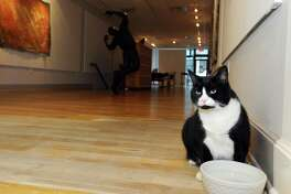 Indiana, one of two cats living inside the Fernando Luis Alvarez Gallery, drinks from his water bowl inside the gallery in downtown Stamford, Conn. on Thursday, Oct. 27, 2016.