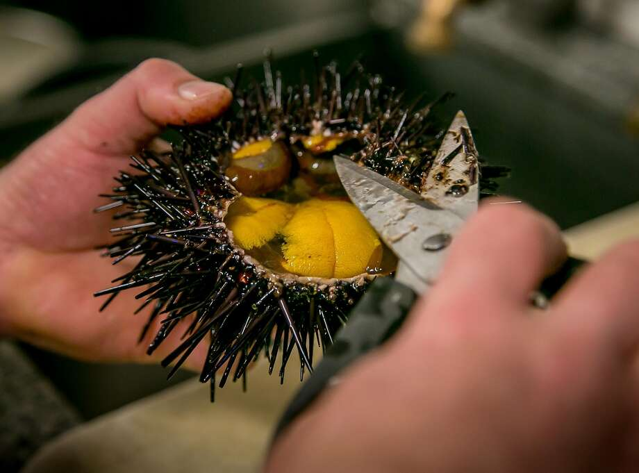 Uni being cleaned at Swan Oyster Depot. Photo: John Storey, Special To The Chronicle