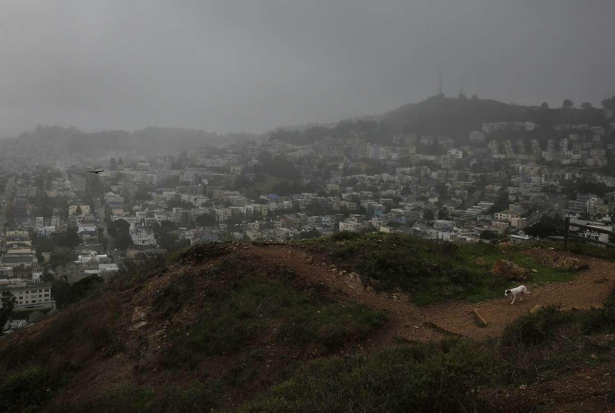 A lone dog walks through Corona Heights Park as rain mists down around it Oct. 28, 2016 in San Francisco, Calif.
