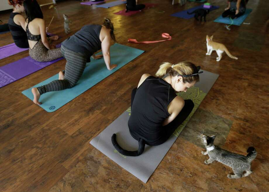 Cat-costumed Christa Cloudt, right, plays with a friendly feline at a yoga class Saturday at the Houston Humane Society. The event was a Halloween-themed cat yoga class and social with adoptable cats. Photo: Melissa Phillip, Staff / © 2016 Houston Chronicle