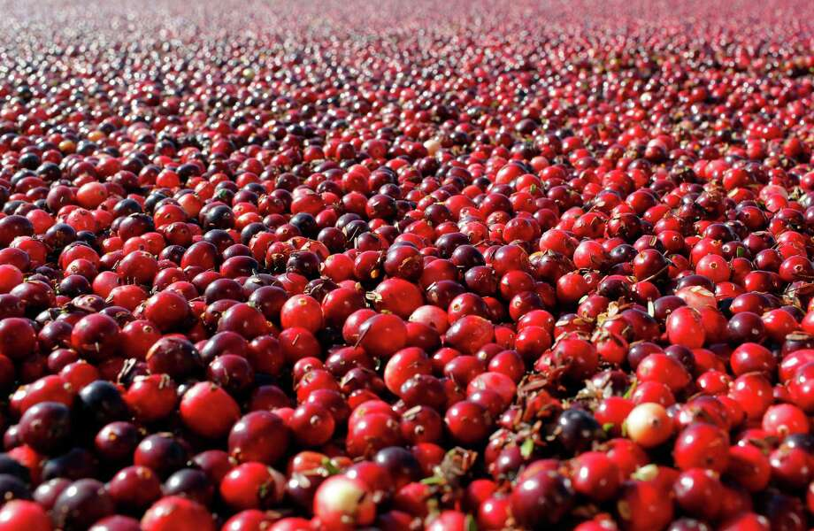 Cranberries are shown in a field in South Haven, Mich. In a new study, they didn't prevent or cure urinary infections in nursing home residents. Photo: Mark Bugnaski, MBO / AP2012