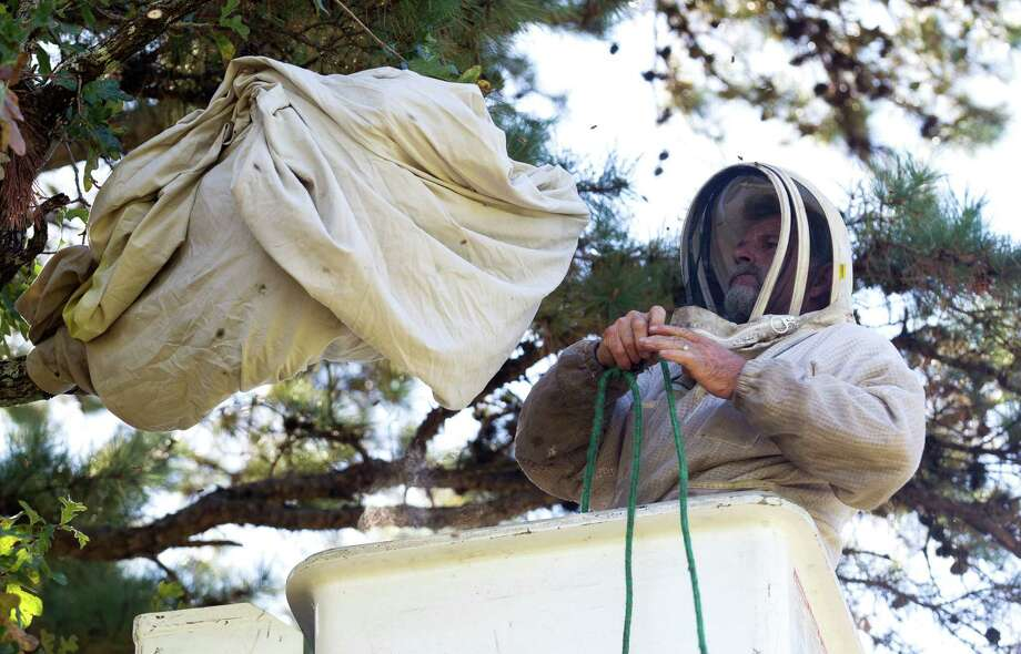 Carlos Madruga, with Professional Honeybee Removal, covers a beehive after removing 20,000-30,000 bees from a hive at the South Montgomery Girls Softball League fields Thursday, Oct. 27, 2016, in Spring. The bees were transported along with the hive to the Montgomery County Beekeeper Association. Photo: Jason Fochtman, Staff Photographer / Houston Chronicle