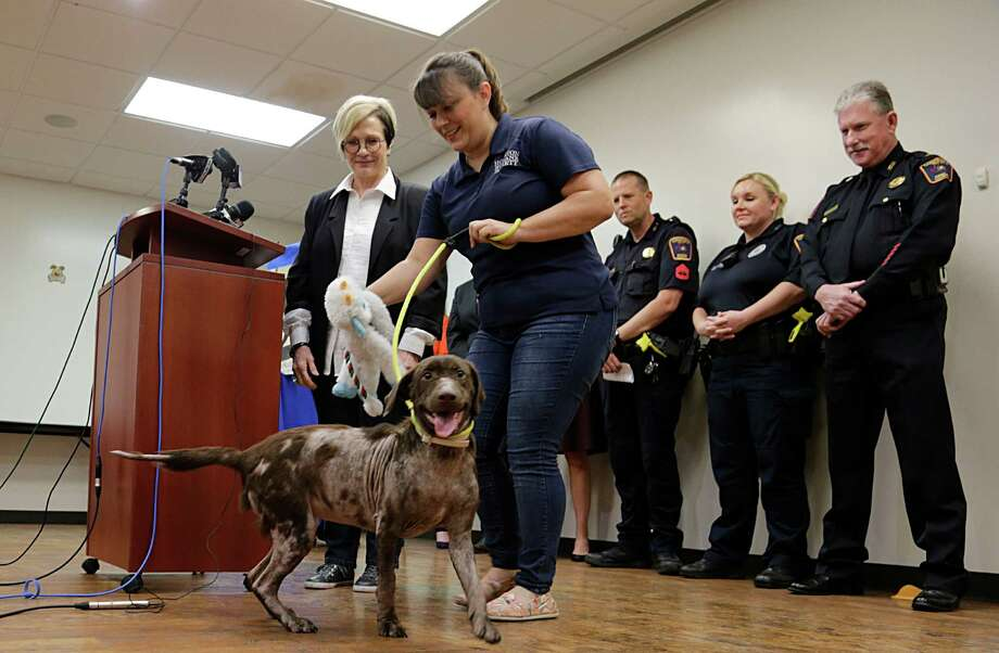 Houston Humane Society Executive Director Sherry Ferguson, left, and Monica Schmidt show the improvement Bella has made at a news conference on Monday. Photo: James Nielsen, Staff / © 2016  Houston Chronicle