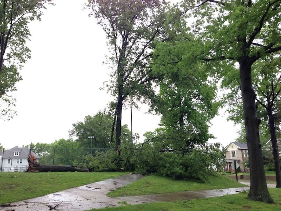 A tree has been uprooted near Lincoln Middle School. Photo: Ron Harris/Intelligencer