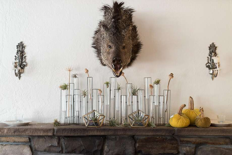 The head of a boar slain by the arrow of the sister of chef Brad Briske, hangs over a mantel at his recently opened restaurant called Home on Main Street in Soquel. Photo: James Tensuan, Special To The Chronicle