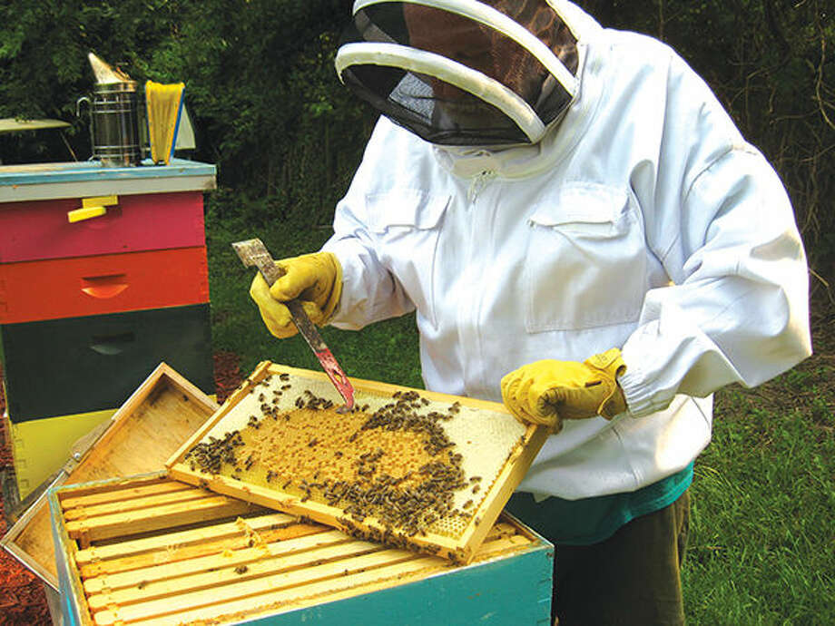 Beekeeping One Honey Of A Hobby The Edwardsville Intelligencer