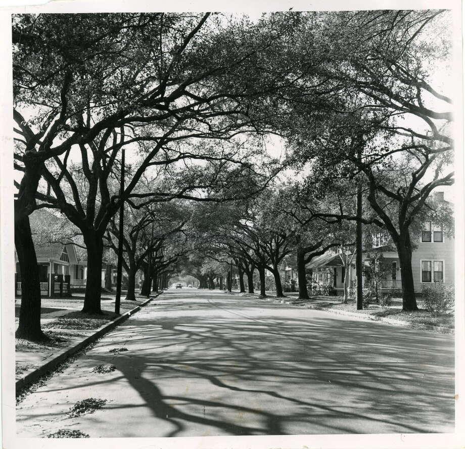 HOUSTON HEIGHTS 1956 Bayland Avenue -- Houston 02/21/1956 Photo: Pete Liddell/Houston Chronicle