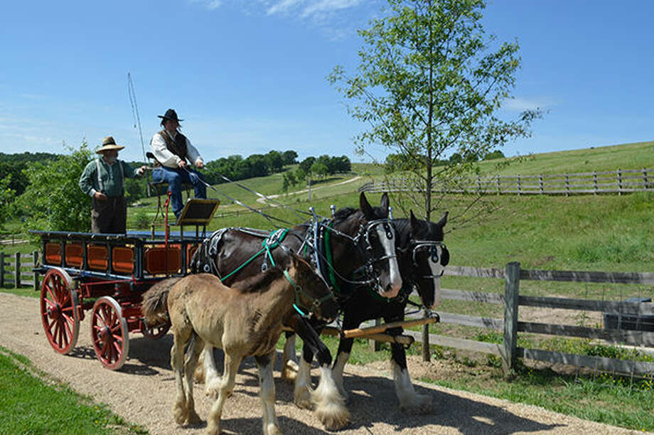 While a foal tags along with its mother, Darryl Coates and Ashlee Hughes lead a team of Shire draft horses over a farm road. Photo: Missouri Division Of Tourism