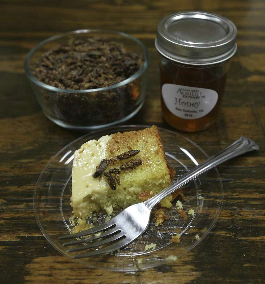 On the menu is a honey-drizzled flan cake topped with sugar- and cinnamon-coated grasshoppers. Photo: William Luther /San Antonio Express-News / © 2016 San Antonio Express-News