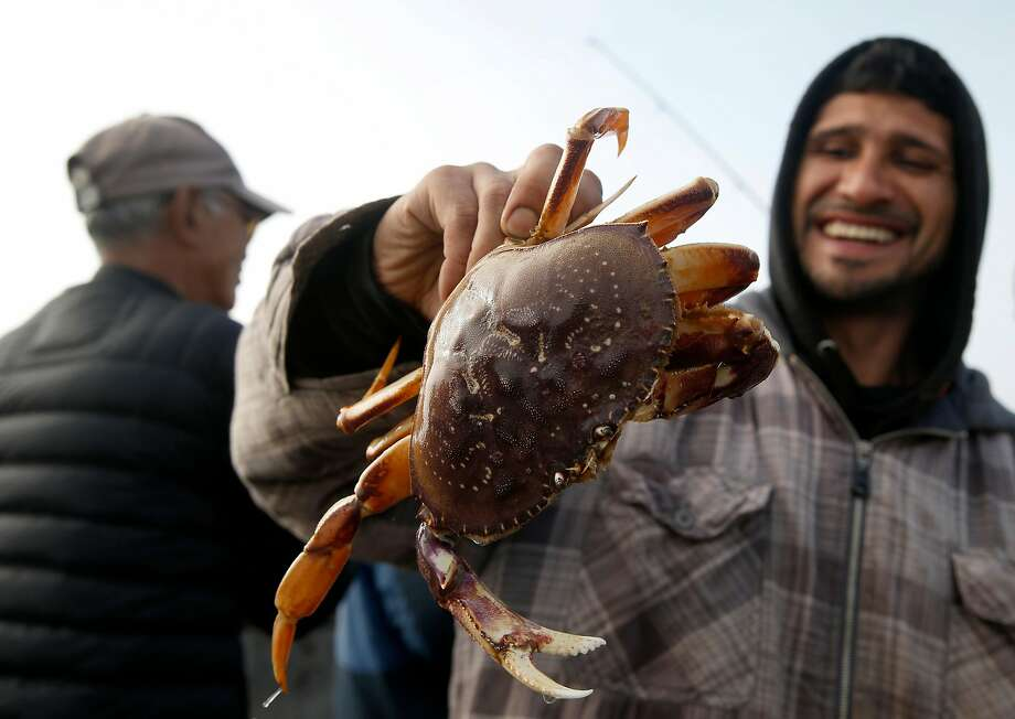 Miguel Linares shows off a Dungeness crab caught at the pier in Pacifica on the first day of the recreational season in 2016. Photo: Paul Chinn, The Chronicle