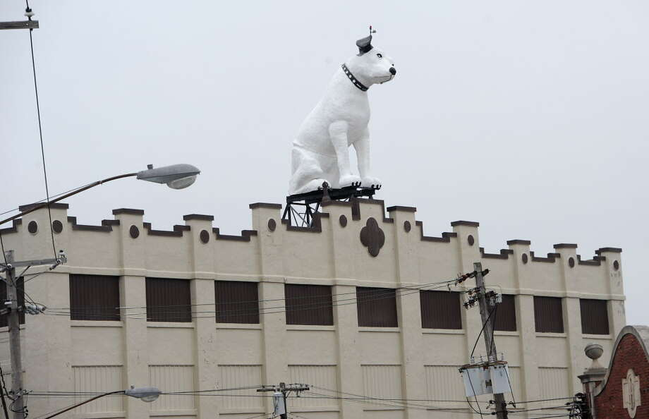 """Keep clicking to learn about things that the Capital Region holds sacred.Nipper the Dog """"may be made of fiberglass but his watching over the city of  Albany for the last 60 years has certainly woven him into the very fiber  of this community,"""" Sen. Charles Schumer said. Photo: Lori Van Buren / 00029782A"""