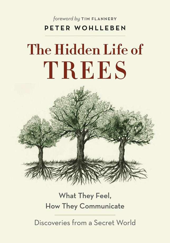 """The Hidden Life of Trees"" Photo: Greystone"