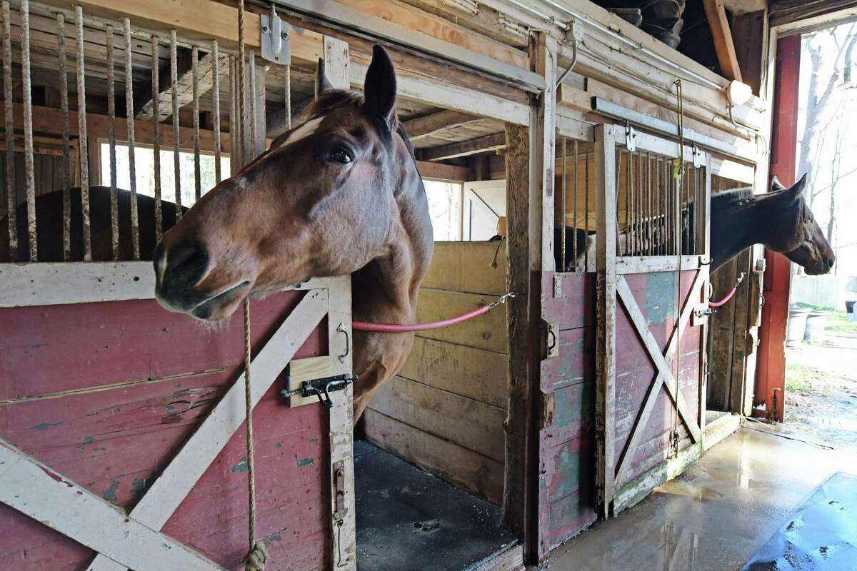 King, left, and Manny, two of the horses with the New York State Park Police Mounted Unit are seen in their stalls on Monday, Nov. 7, 2016, in Saratoga Springs, N.Y. The two horses will be retired from duty at Spa State Park. There will be no more mounted patrols at the park. (Paul Buckowski / Times Union)