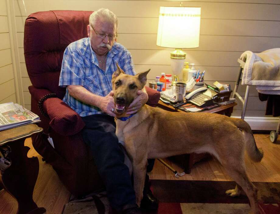 Kenneth Job pets his dog, Jeb, after the 2-year-old Belgian Malinois returned home Nov. 2 in St. Clair Township, Mich. Jeb had spent weeks on death row until DNA tests cleared him in the death of a neighbor's dog. Photo: Mark R. Rummel, MBR / The Times Herald