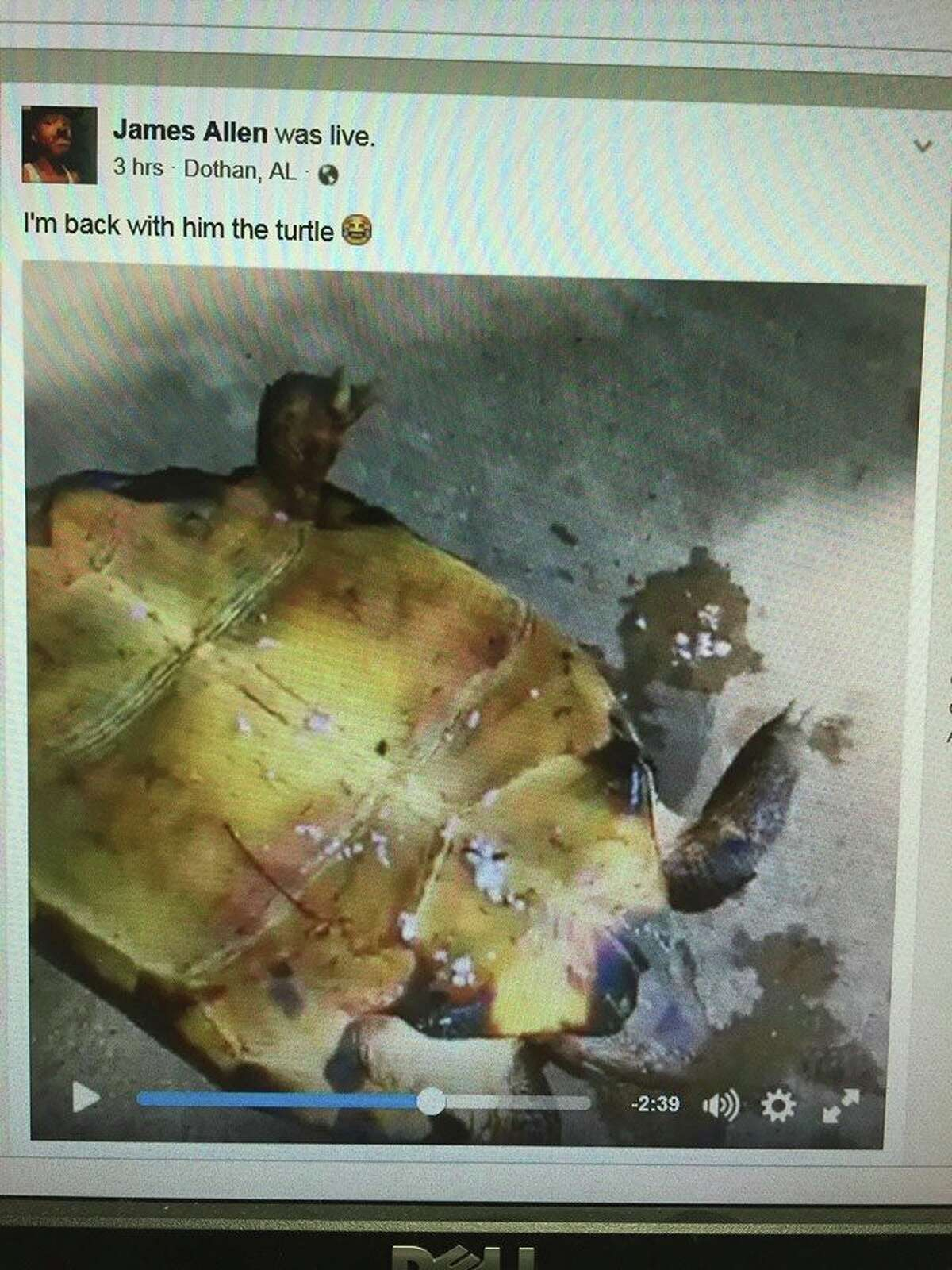 James Allen, 19, from Dothan, Alabama, faces animal cruelty charges for allegedly setting a rare tortoise on fire and streaming it on Facebook Live.