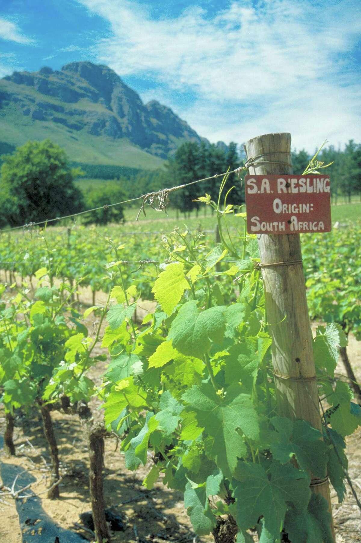 The Delheim Estates winery in Stellenbosch, South African wine region.