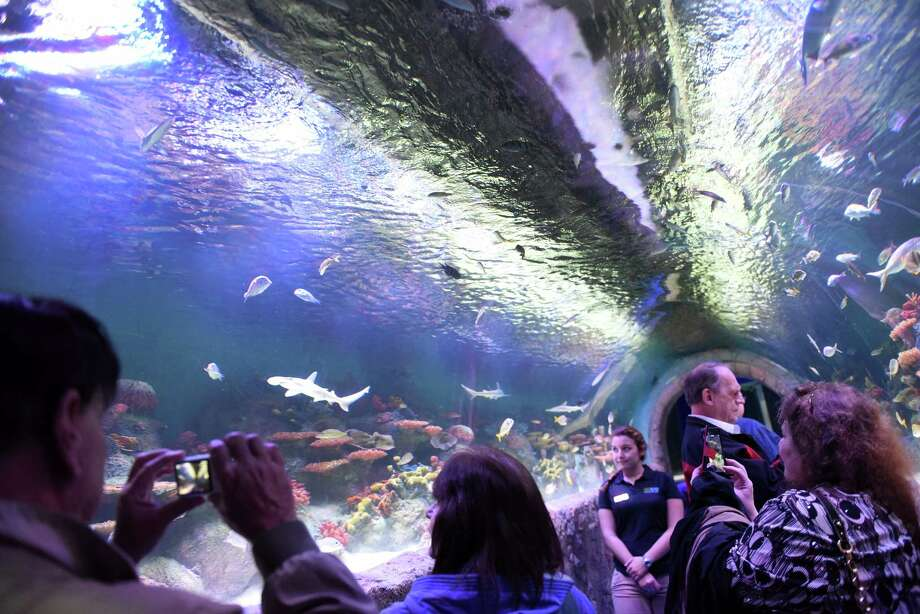 Check out the new Via Aquariumat the former Rotterdam Square Mall. See stingrays, sharks, coral reefs, fish from Asia and Africa and visit the Discovery Cove to touch sea stars and horseshoe crabs. Visit the website. Photo: Michael P. Farrell / 20038644A