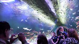 The Via Aquarium, the aquarium at the former Rotterdam Square Mall, held its grand opening on Saturday Nov. 12, 2016 in Rotterdam, N.Y. (Michael P. Farrell/Times Union)