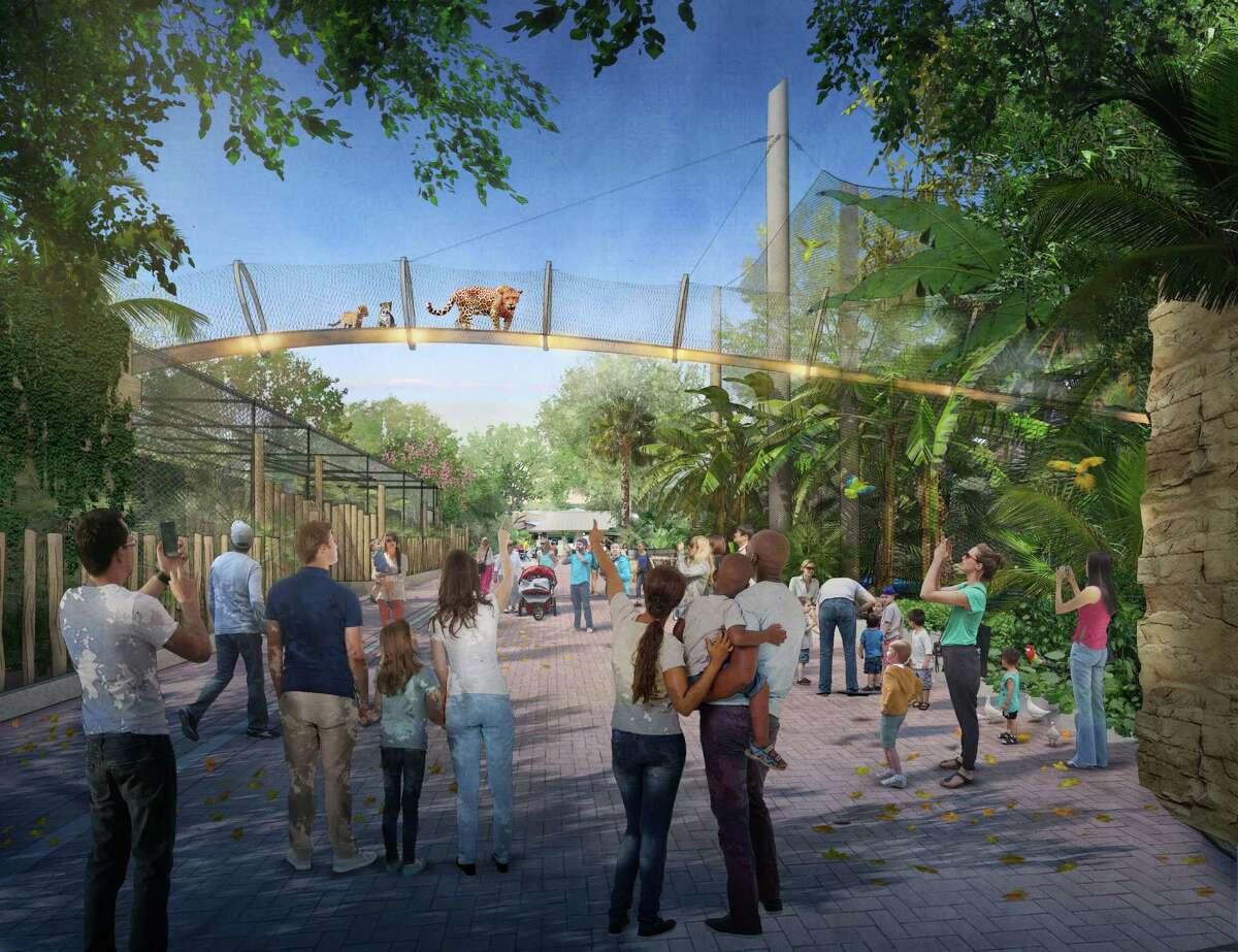 This artist's rendering shows the proposed jaguar catwalk at the San Antonio Zoo. The soaring walkway would give the large felines the heights they prefer and access to the river that runs through the neighboring exhibit.
