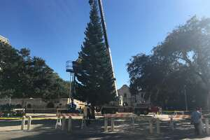 Workers place a  55-foot white fir Christmas tree in Alamo Plaza on Tuesday, Nov. 15, 2016, to prepare for the holiday season.
