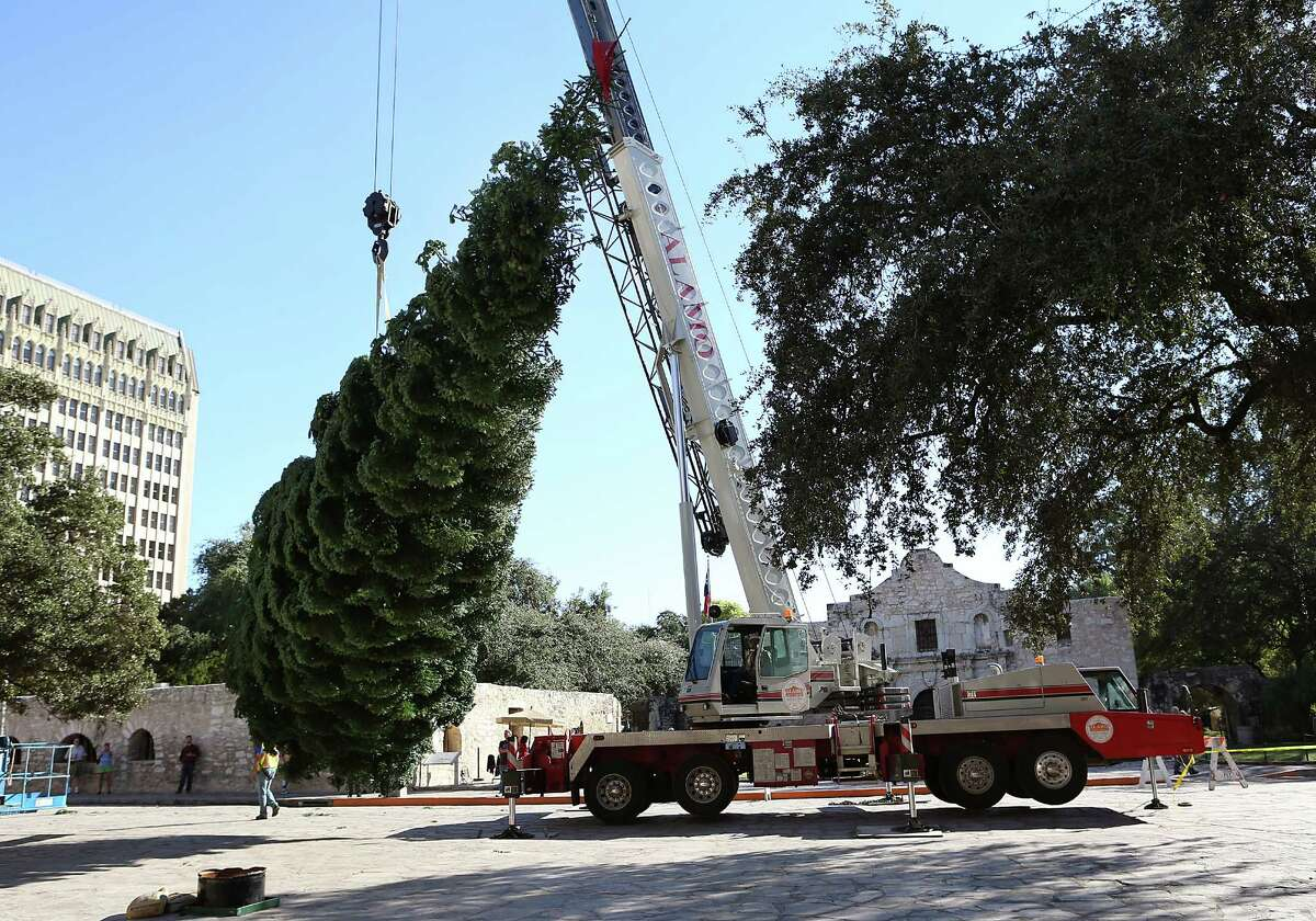 The HEB sponsored Alamo Plaza Christmas Tree was delivered on Tuesday, Nov. 15, 2016 . A flatbed trailer truck pulled in front of the Alamo around 9:30 in the morning with the 55-ft white fir from the Shasta Mountains in Northern California. The tall holiday tree was only the top half of a much larger tree. The tree, which was placed in position and anchored, will be decorated with more than 10,000 red and white lights, and gold and silver ornaments.