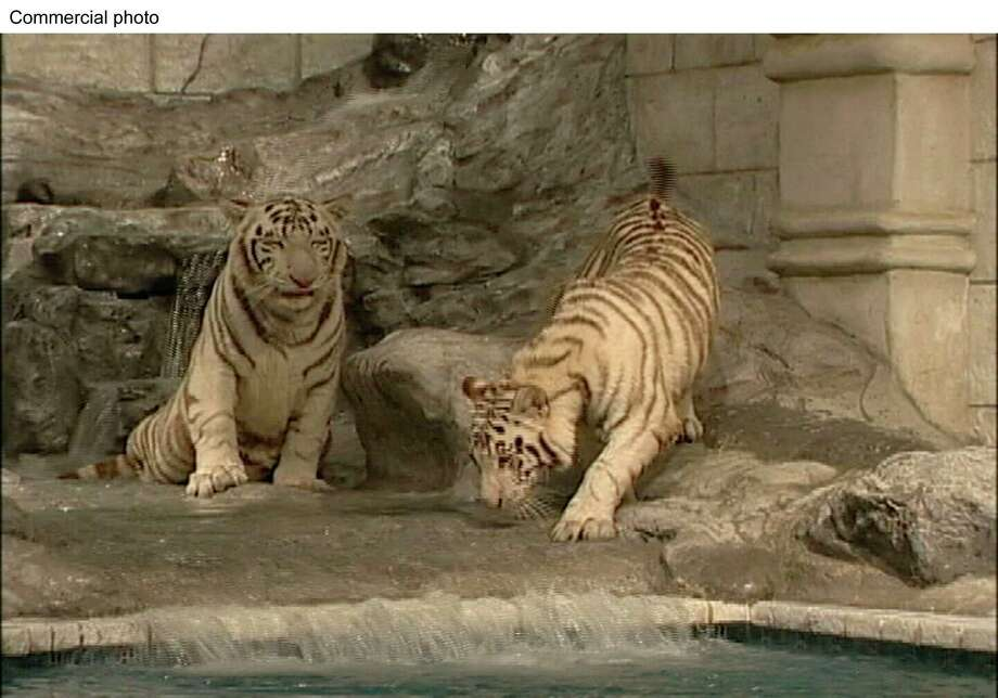 White tigers Nero and Marina are seen in their habitat at Downtown Aquarium, which is owned by Landry's Inc. / LANDRY'S, INC.
