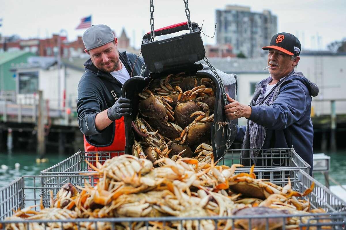 Fisherman Joe Gallia Jr. and Martin Cornejo (right) dump freshly caught crab into metal crates, at Pier 45 at Fisherman's Wharf, San Francisco, California, on Tuesday, Nov. 15, 2016.